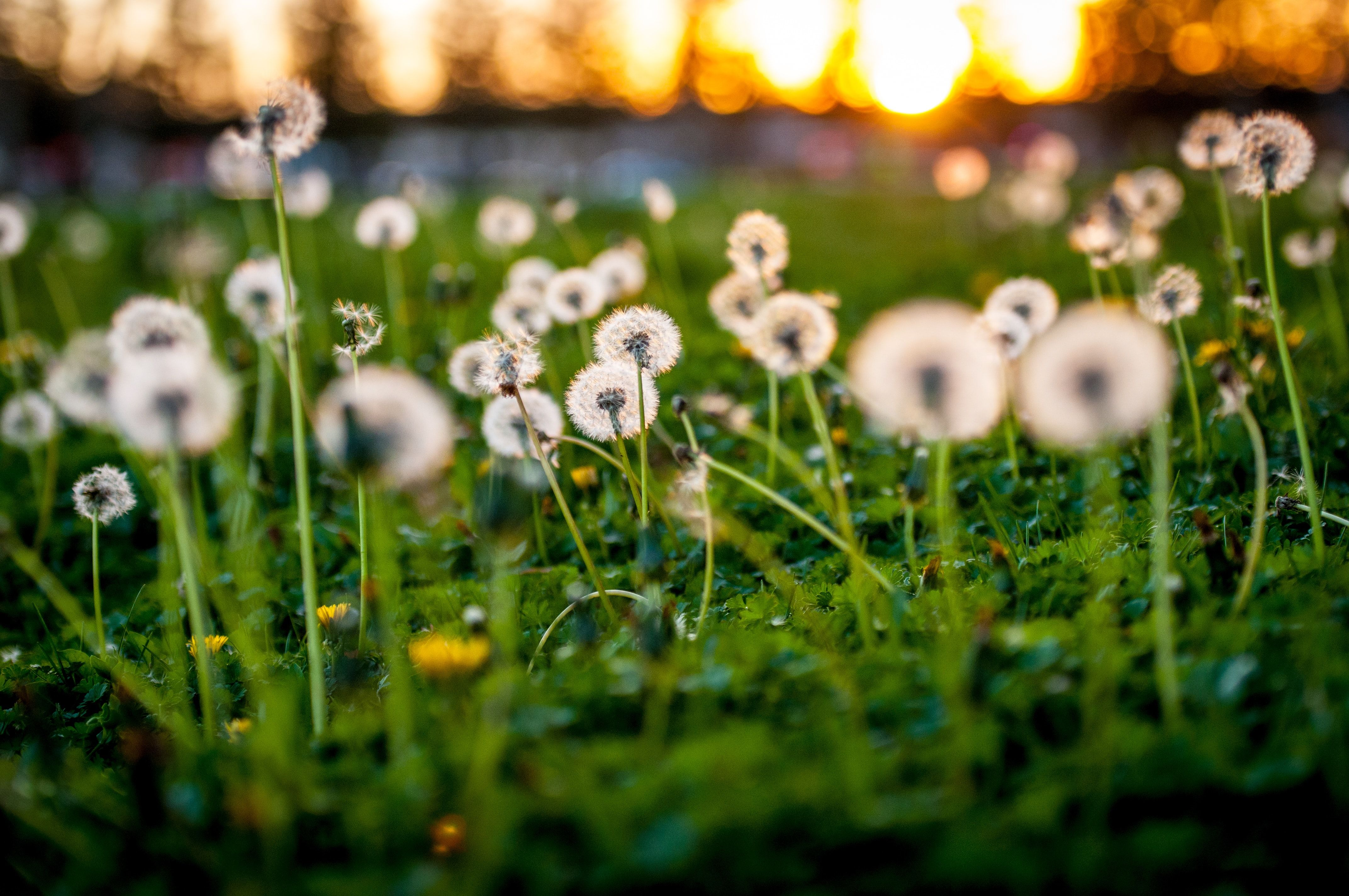 Spring Gardening: How to Get Rid of Weeds Organically