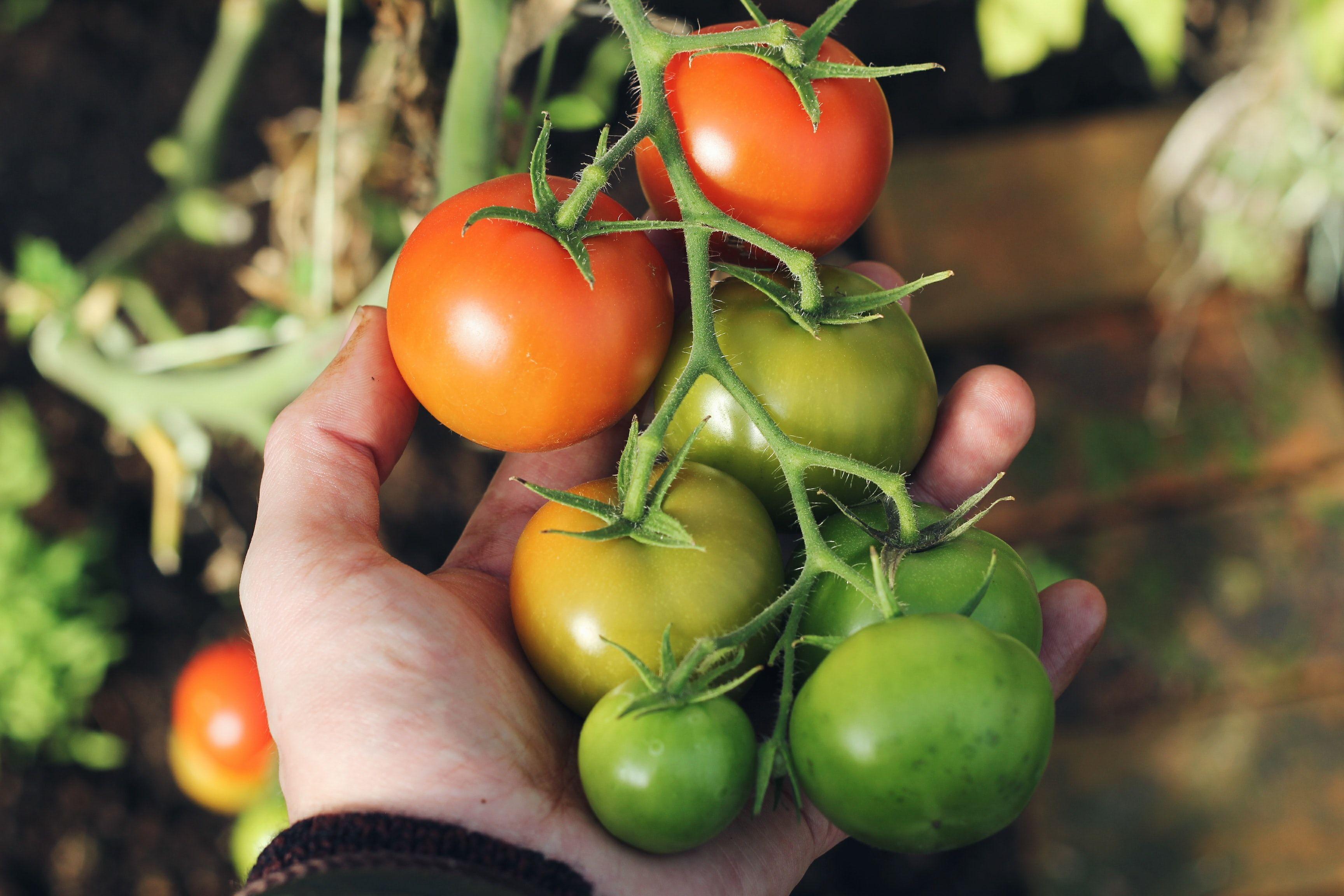 Spring Gardening: Vegetable Gardening 101